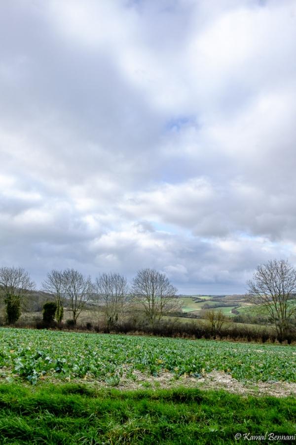 The Picardie