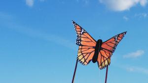 Monarach kite composite